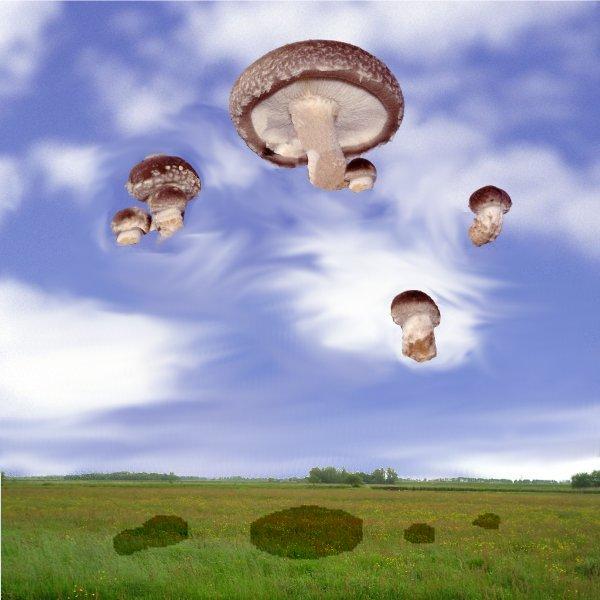 [Bild: Fliegende_Pilze.jpg]