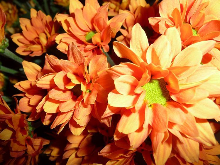 Blumen_09.jpg