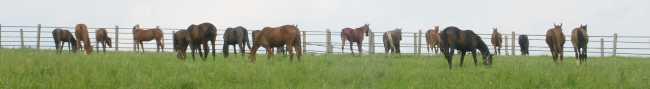 Pferde im Zaum.jpg