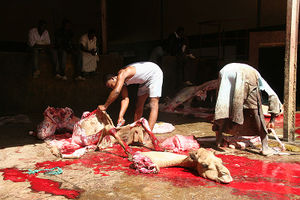 800px-Camel slaughter.jpg