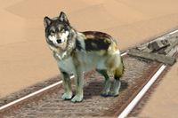 Schienenwolf.jpg
