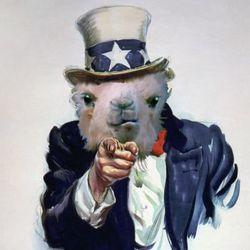 Kamel wants you.jpg