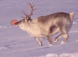Rudolph the Red-Nosed Reindeer.jpg