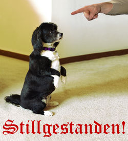 Stellenanzeige Hund.jpg