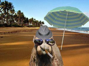 Beachcamel.jpg