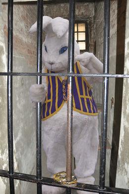 Osterhase hinter Gittern.jpg