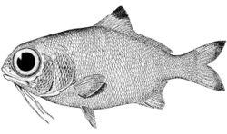 Fisch-1-.jpg