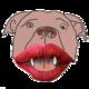Pitbull mit Lippenstift.png