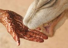 Mehndi on hand with camel.jpg