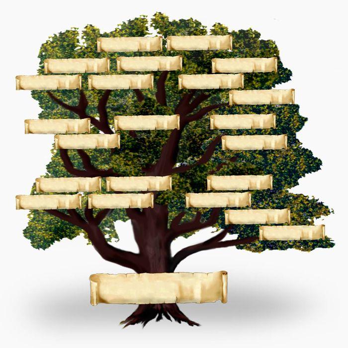 Stammbaum steht.jpg