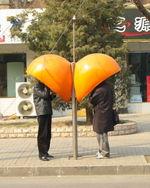 Wohnapfelsinen.jpg