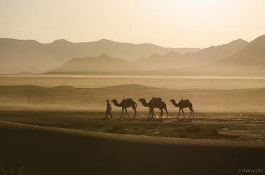 Marokko Karawänchen.jpg