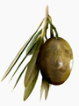 Palm Olive.png
