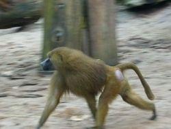 Primatenwelt.JPG