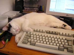 800px-Sheila the PC cat.jpg