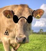 Blinde Kuh.jpg