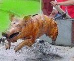 Sparschwein.jpg